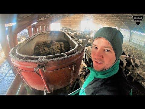 #MoralityFarmVlog 4: Ernähren wir Kühe besser als Menschen?