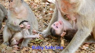 Just newborn baby monkey - why mom careless like this? Poor baby girl Sabrina cry loudly