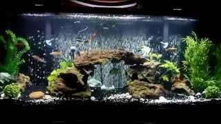 LED aquarium light. Before and after. Current Satellite LED Plus.