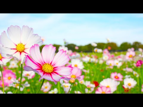 Morning Relaxing Music - Piano & Guitar Music for Stress Relief and Studying (Kate)
