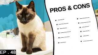 10 pros and cons of having a siamese cat