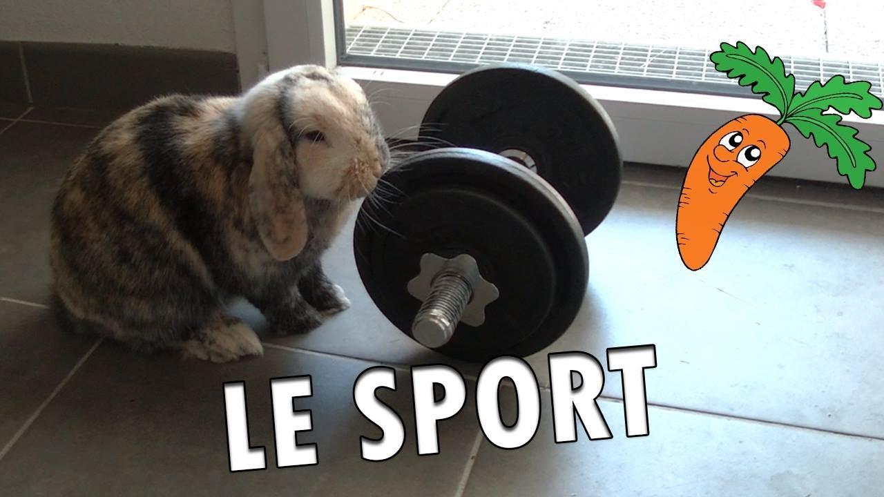 Drôle 2 Lapin : Le Sport - YouTube