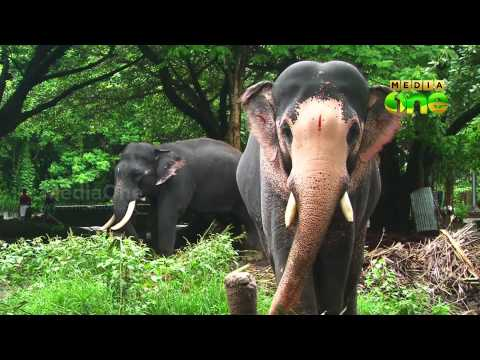 Cruelty against elephants -Truth inside Episode 63 Part[1]