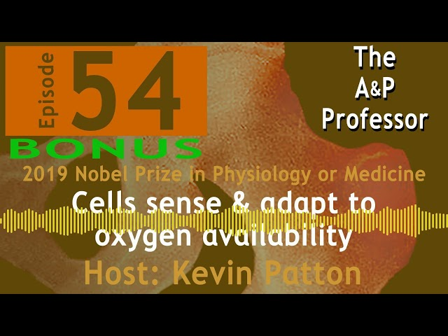 Cells & Oxygen Availability | Nobel Special | Episode 54 Bonus