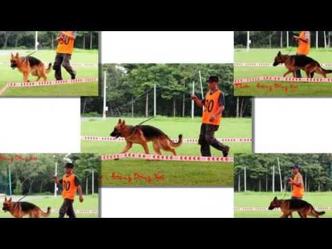 Dog Show GSD Miền Nam ( Photo : Hoàng _ Đồng Nai )