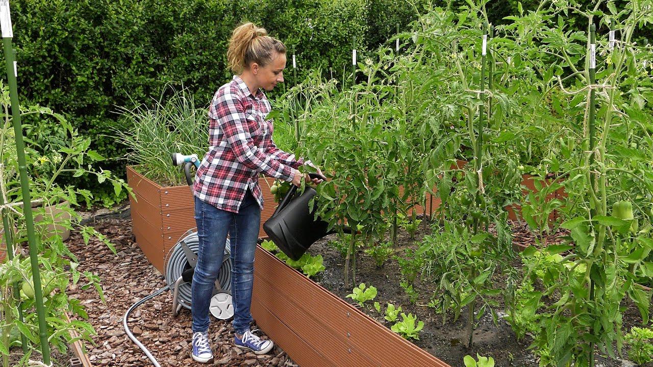 Ogród warzywny - suszenie ziół, lipcowe zbiory i mączlik szklarniowy