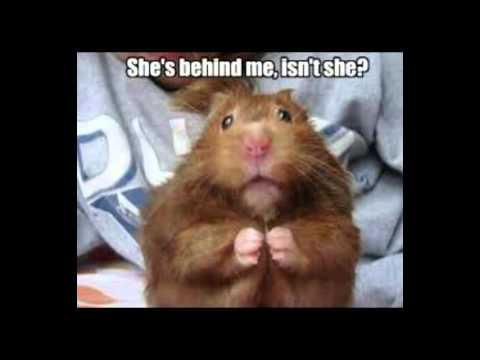 Funny Animal Memes : Funny animal memes youtube
