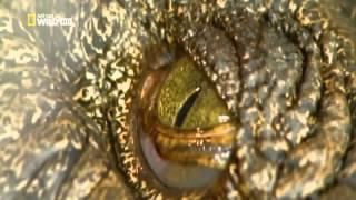 Крокодилы древние хищники Док фильм