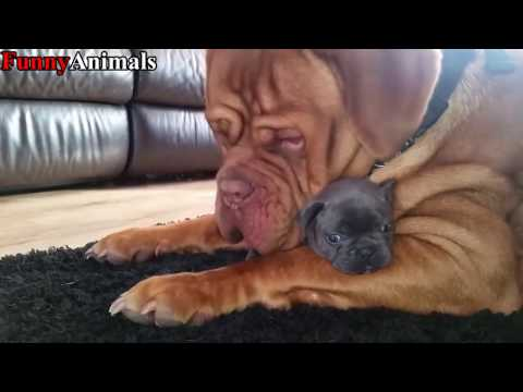Funny Big Dog Meeting and Playing Little Puppy Compilation 2017