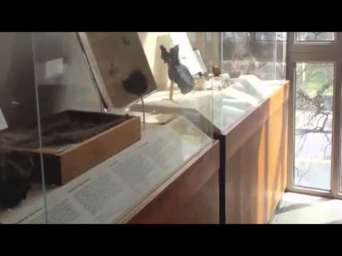 Yale Peabody Museum Quicktime