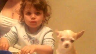 Забавные животные. Эти забавные и смешные собаки. Смешные дети и домашние животные. Funny dogs.