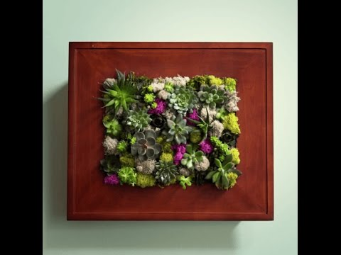 How To Make A Succulent Wall Garden With Picture Frame