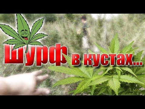 Шурф в кустах конопли(марихуана), Good-good...Pit In The Bushes Of Cannabis (marijuana),good-good...