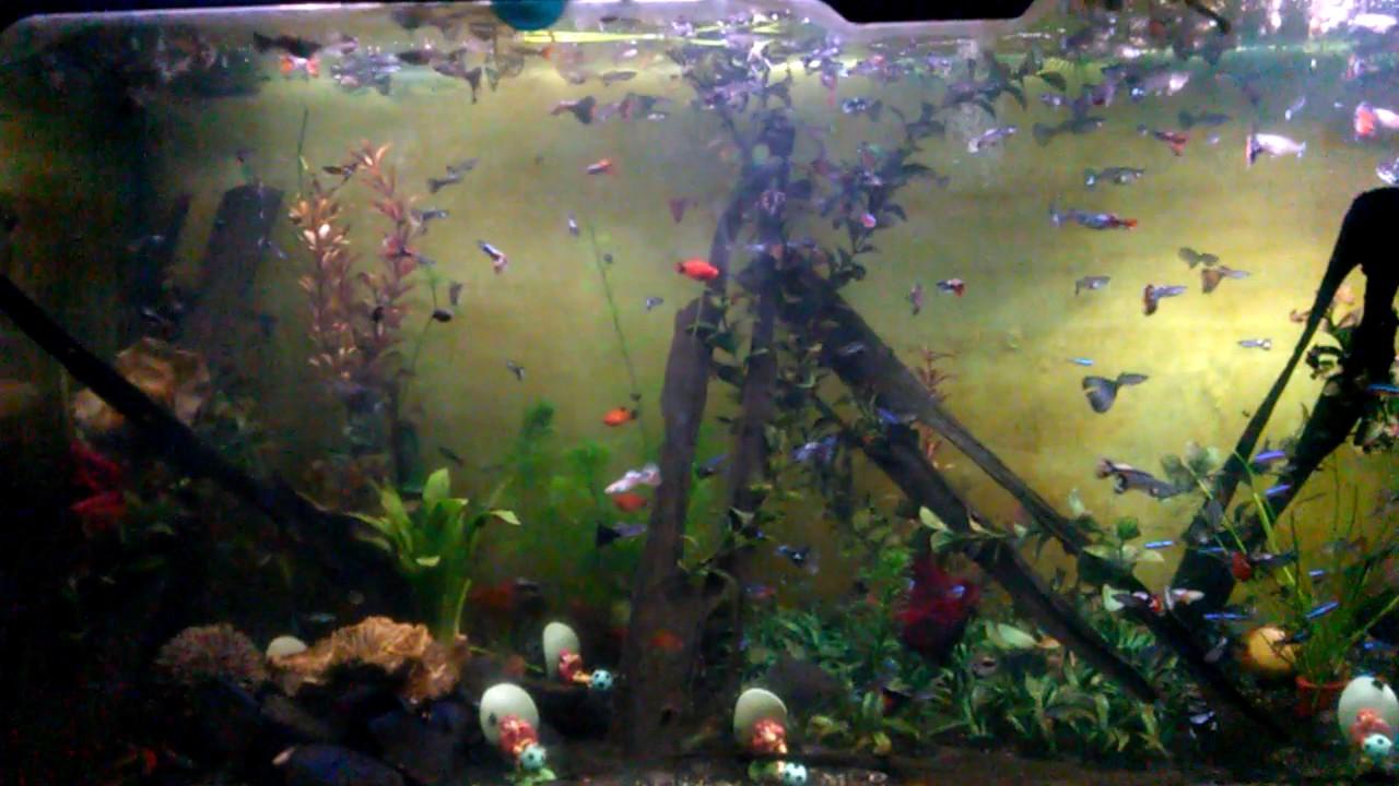 Ikan Hias Kecil Cantik Youtube
