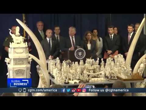 New York City cracks down on ivory trade
