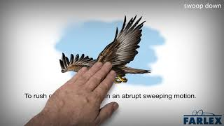 swoop down