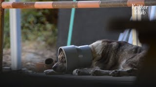 Dog's Head Is Stuck In A Pipe...   Kritter Klub