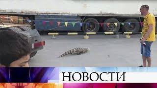 На улице Новосибирска нашли сбежавшего из цирка крокодила.