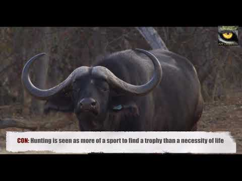 Pros And Cons Of Hunting Wildlife