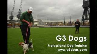 Dog Trainer Courses
