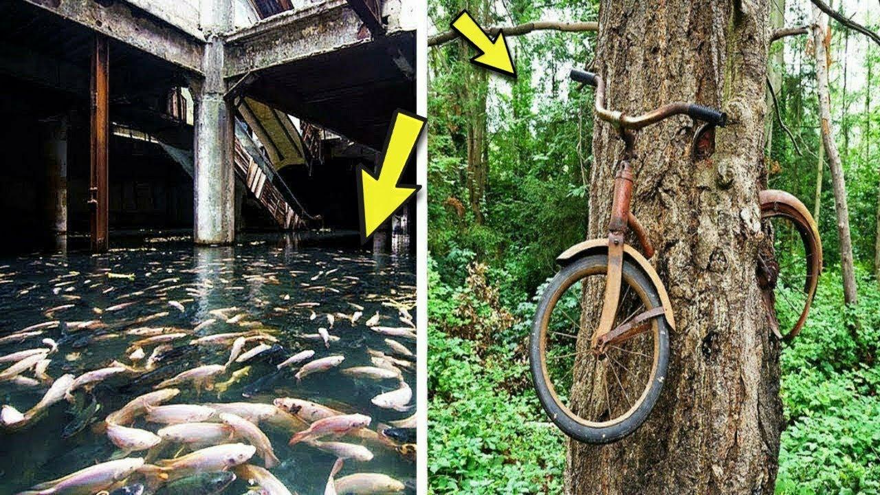 ভিডিওটি দেখলেই বুঝতে পারবেন প্রকৃতি কতটা ভয়ংকর হতে পারে- Nature Takes Control Over Abandoned Places