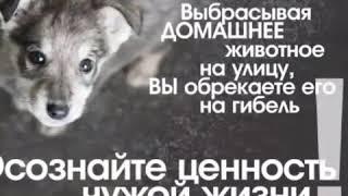 Грустное видео о животных ! До слёз !😢😢😢😢😢😢