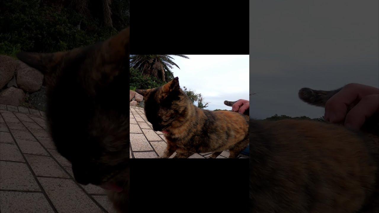 野良猫がアレをせがんできて仕方ない#Shorts【野良猫】【感動猫】