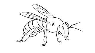 How to Draw a Bee / Как нарисовать пчелу