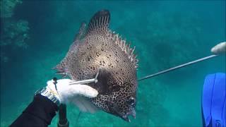 魚突きの情報や魅力を発信して、 地域振興に繋がる産業に成長させたいで...