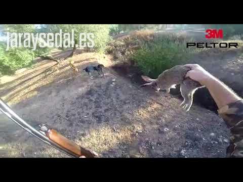 Conejo salta a un perro / I Certamen de vídeos de caza Jara y Sedal - Peltor 3M