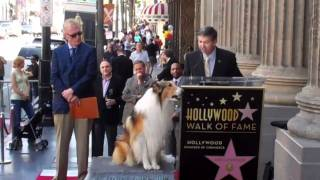 Lassie voice of authority congratulates Bill Geist