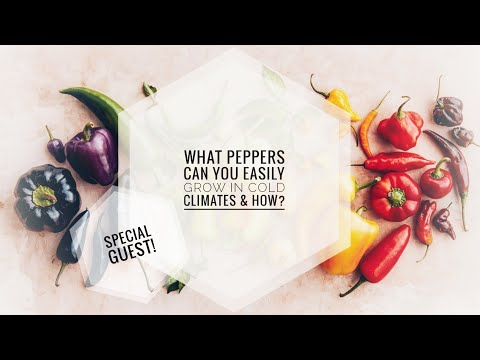 EASY PEPPERS FOR COLD CLIMATES. HOW TO GROW PEPPERS IN CANADA. | Gardening in Canada/Mighty Mustache