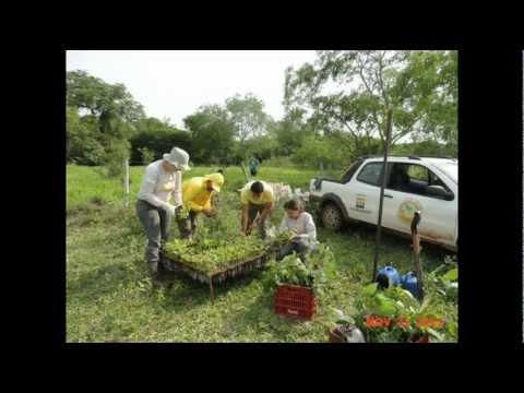 IASB | Projeto Ilhas Verdes | Atividades 4 Trimestre