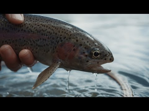 Fishing BC Presents: Fly Fishing The Columbia River With St. Mary Angler