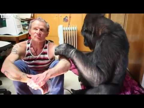 When bassist Flea met Koko the gorilla   BBC News