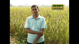 Malarum Bhoomi|Valar Solai|14 02 2019 |Epi 3031| பாரம்பரிய அரிசி வகைகள் மற்றும் சத்துக்கள்