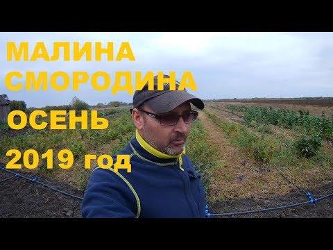 МАЛИНА СМОРОДИНА ОСЕНЬ 2019