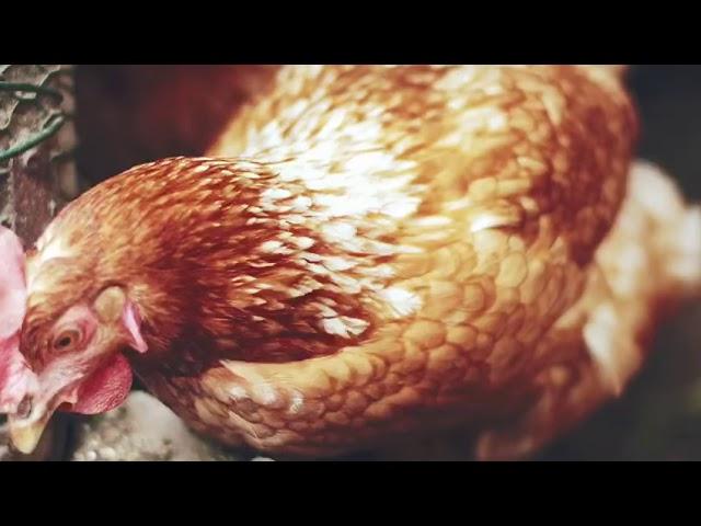 """""""Hasta los huevos"""": la nueva campaña publicitaria de la Cámara y el Cabildo para impulsar el comercio insular."""