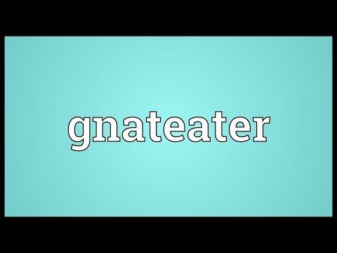 Header of gnateater