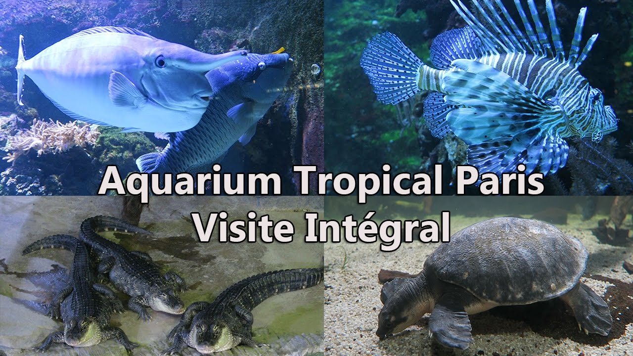 Aquarium tropical de la porte dor e paris viste int gral 1080p60 ultra youtube - Aquarium tropical de la porte doree ...
