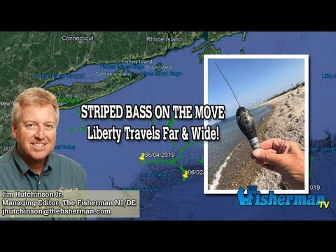 October 24, 2019 New Jersey/Delaware Bay Fishing Report With Jim Hutchinson, Jr.