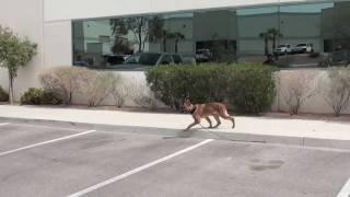 Dog Training - Teaching Your Dog Remote Boundaries