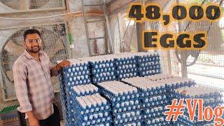 48,000 Eggs Poultry Farm House !! Eggs Farm House Vlog !! Layer egg Poultry Farm  #eggs #poultryfarm