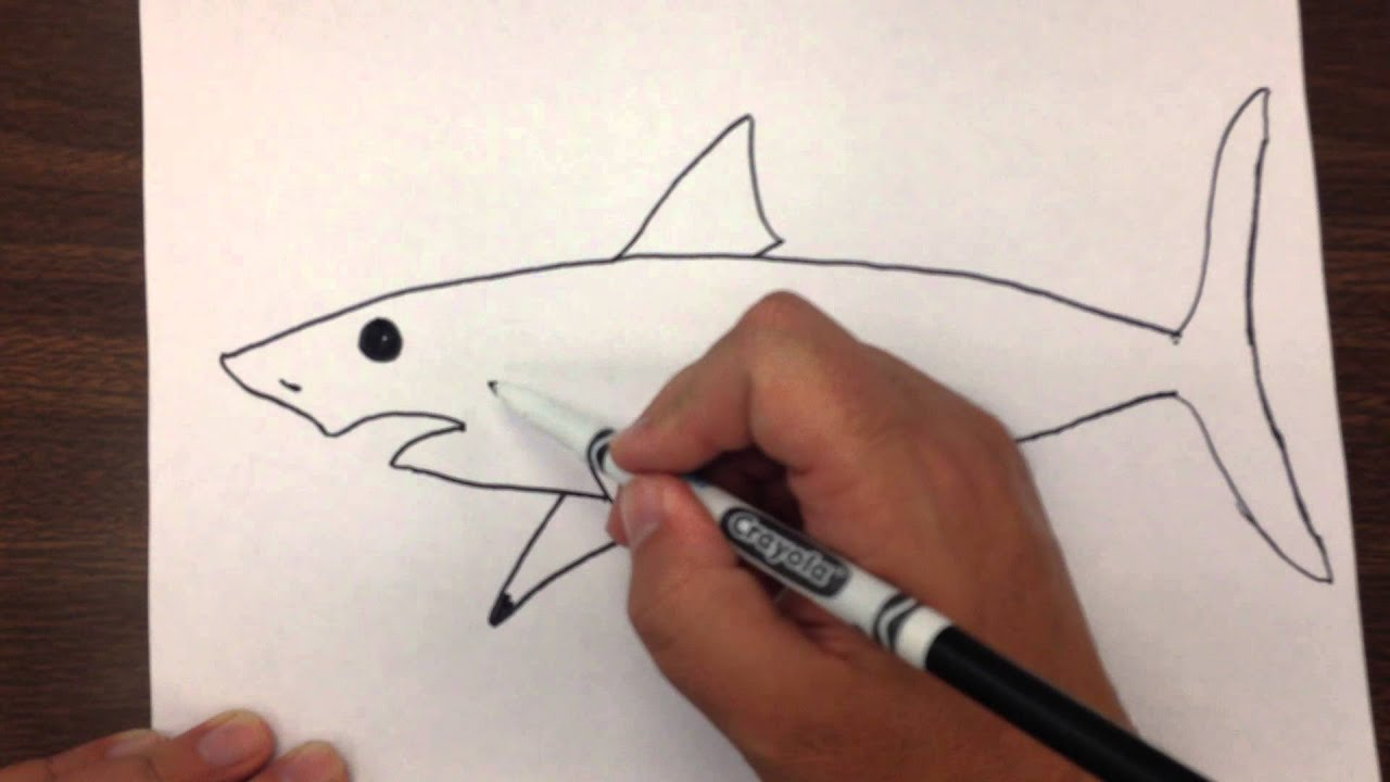 How To Draw A Great White Shark Step By Step Youtube