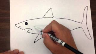 Video How to Draw a Great White Shark Step by Step download MP3, 3GP, MP4, WEBM, AVI, FLV Juni 2018