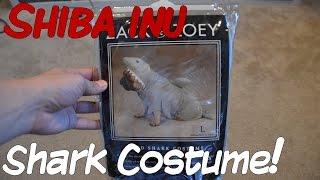 Shiba Inu Puppy Halloween Shark Costume!