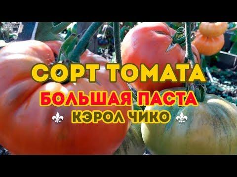 Сорт томата Большая паста Кэрол Чико! Полный обзор сорта
