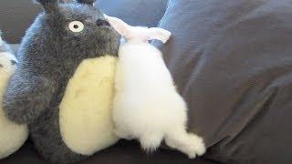 Bunny Runs But Doesn