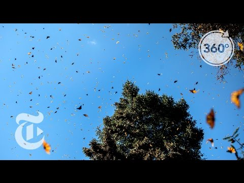 Basking in Butterflies | The Daily 360 | The New York Times