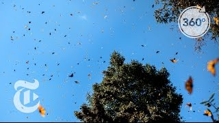 Basking in Butterflies | The Daily 360 | The New York Times thumbnail